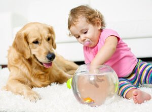 ecofriendly carpet cleaning in temecula ca