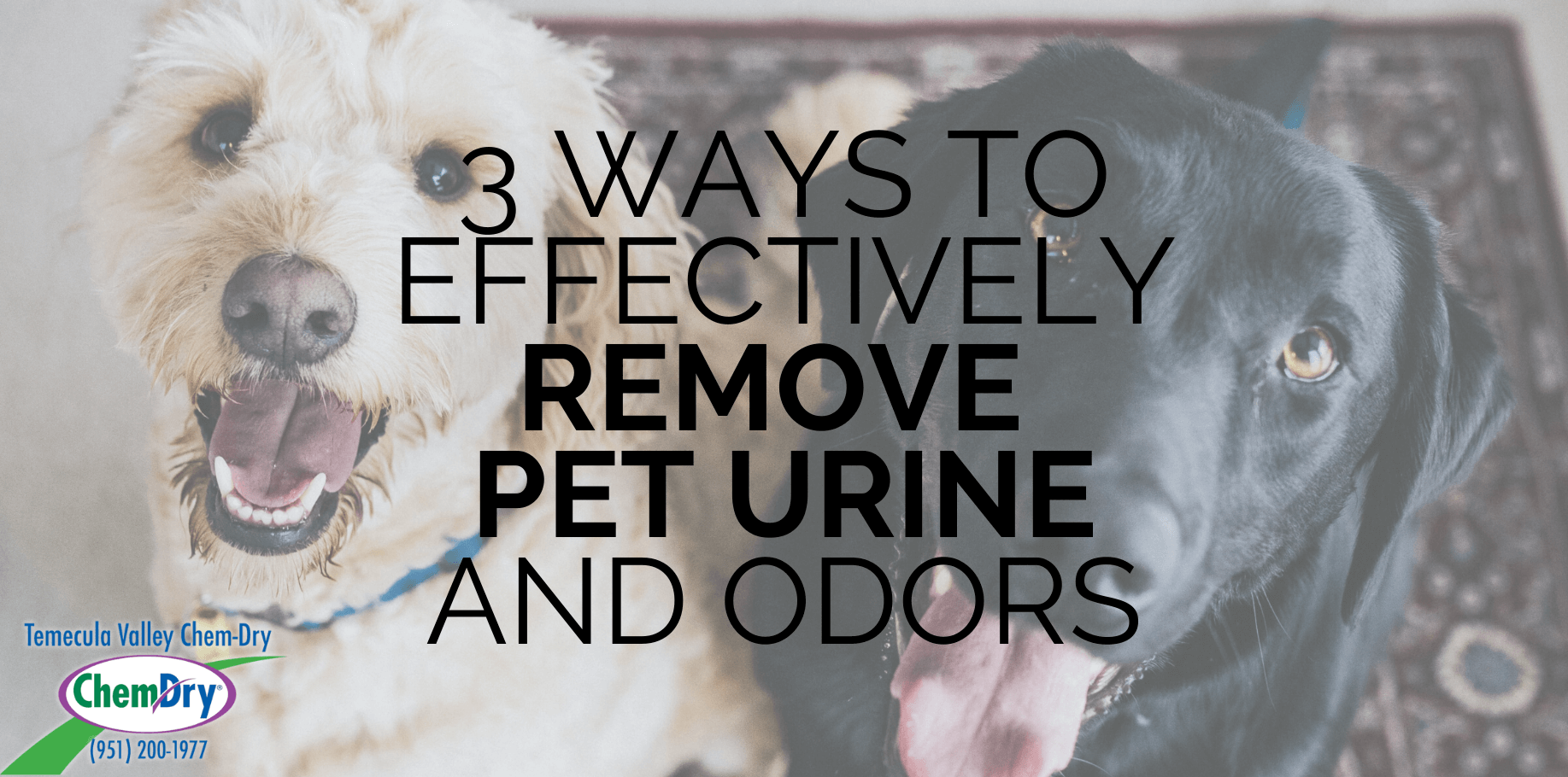 pet urine removal treatment Temecula Valley Chem-Dry