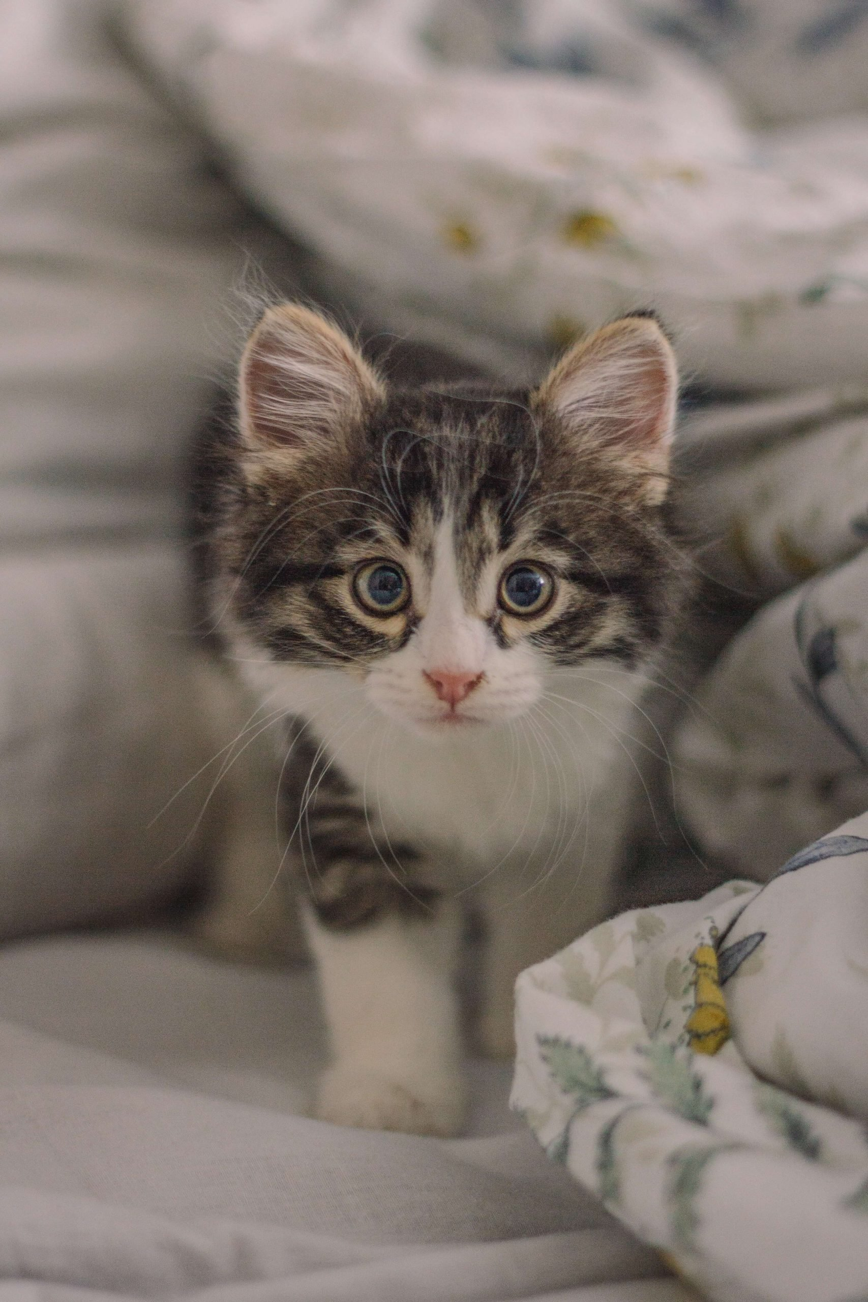 Clean the carpet and upholstery that your cat has been on.